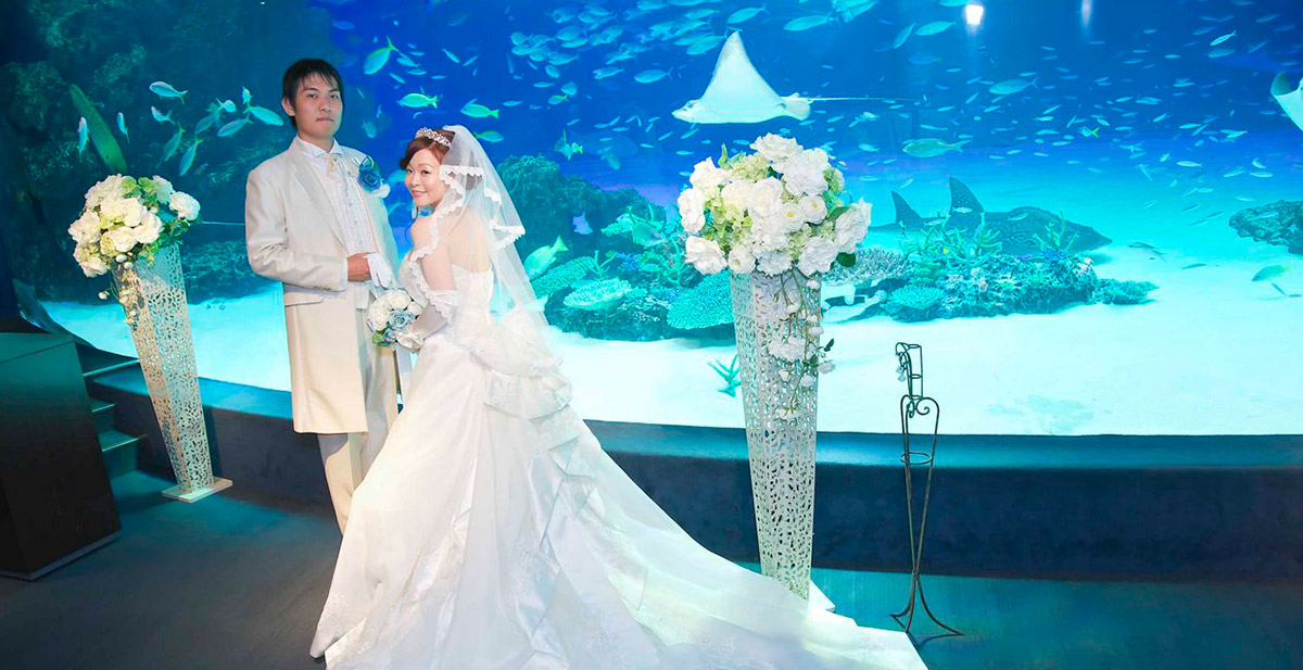 9a163435ddd28 公式 サンシャインスカイブライダル|水族館&上空210mの結婚式